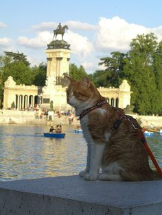 Out for a stroll at The Buen Retiro Park, Madrid
