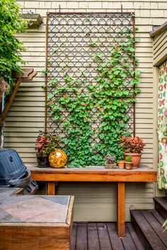 A homeowner with a magpie's eye and a restless imagination turns his garden into a space brimming with ideas Small Cottage Garden Ideas, Garden Cottage, Black Eyed Susan Vine, Shed Windows, Backyard Office, Backyard Ideas, Garden Office, Window Planter Boxes, Heuchera