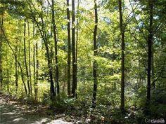 Maison à vendre | Maisons unifamiliales | Page 29 Gatineau, Trunks, Plants, Homes, Drift Wood, Stems, Tree Trunks, Plant, Planting