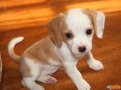 I can't even express how cute this puppy is.
