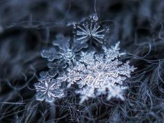 Snowflakes up close | WMUR Home - News