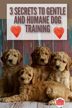 Dog training should always be humane. See how you can train your dog in a gentle way with these dog training tips. #dogs #dogtraining #dogtrainingtips