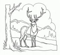 Free Coloring pages for boys and girls: Animals: Bambi Coloring Pages For Boys, Free Coloring Pages, Adult Coloring, String Art Patterns, Pyrography, Cool Kids, North America, Boy Or Girl, Deer