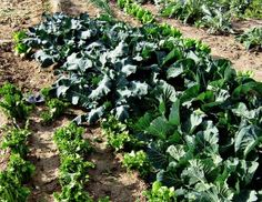 Crop rotation...a must for the homesteader