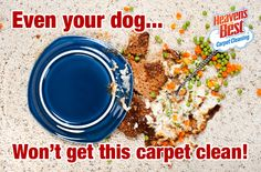 Call on the experts at Heaven's Best to get tough stains out of your carpets. Heaven's Best Carpet Cleaning Ventura County CA 805-445-1220.