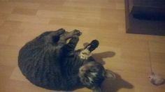 Frizzel met zijn lievelings muisje