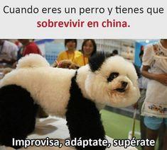 FOTOS GRACIOSAS #lol #lmao #hilarious #laugh #photooftheday #friend #crazy #witty #instahappy #joke #jokes #joking #epic #instagood #instafun #memes #chistes #chistesmalos #imagenesgraciosas #humor #funny #amusing #fun #lassolucionespara #dankmemes #lmao #dank #funnyposts #funnymemes