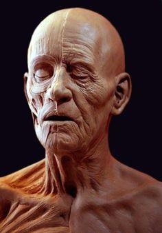 Arte Com Grey's Anatomy, 3d Anatomy, Facial Anatomy, Human Body Anatomy, Anatomy Poses, Anatomy Sketches, Anatomy Study, Anatomy Drawing, Anatomy Reference