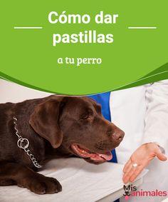Cómo dar pastillas a tu perro -Mejor con Mascotas  Si tu mascota está enferma y no sabes cómo darle pastillas a tu perro, encuentra en este artículo algunos consejos que te servirán de mucha ayuda. ¡Toma nota! #salud #consejos #medicamentos