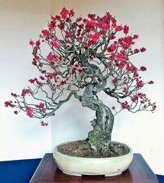 A Visit To The Shunka-en Bonsai Museum Bonsai Art, Bonsai Plants, Prunus Mume, Diy Plante, Bonsai Tree Tattoos, Bonsai Styles, Tree Tattoo Designs, Japanese Garden Design, Maneki Neko