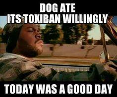 Dog ate its toxiban