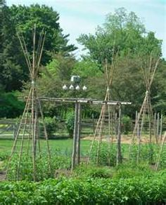 1000 Images About Tomato Cage Ideas On Pinterest Tomato 640 x 480