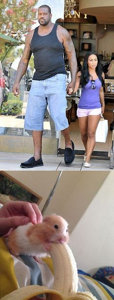 Funny pictures of the day - Big Tall Shaq Shaquille O'Neal And Wife Reminds Me Of A Hamster Eating A Banana