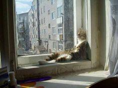 Gato-Preguica-2