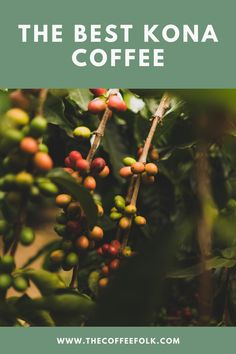 We review the top 5 Kona Coffee brands. Read this review before you buy to ensure you are getting 100% pure Kona Coffee! Best Kona Coffee, Coffee Branding, 100 Pure, Coffee Beans, Brewing, Good Things, Pure Products, Tips, Advice