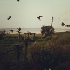 #The Birds. By www.crypticvisionphotography.com Birds, My Love, Photos, Photography, Instagram, Pictures, Photograph, Fotografie, Bird