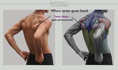 Reference by anatomy sculptors                                                                                                                                                                                 More