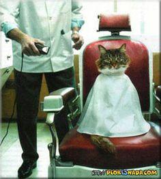 barbershop humor | barber06.jpg en Peoresnada.com