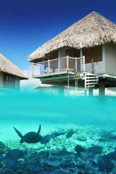 Over water Bungalows Underwater View | Luxury Beach Villas and Bungalows at Le Meridien Bora Bora