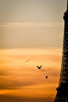 Sunset in Paris and Eiffel Tower Oh Paris, Paris Love, Paris City, Paris Torre Eiffel, Paris Eiffel Tower, Beautiful Paris, Most Beautiful Cities, Midnight In Paris, Tuileries Paris
