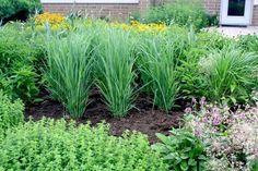 В борьбе с вредителями чаще всего используют  химические вещества, но есть и другой вариант. Существуют растения,  которые могут соседств...