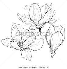Risultati immagini per fiori di magnolia