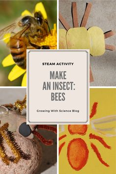 I haven't really made a big announcement about it, but on October 2020 my picture book, How to Build an Insect (illustrated by Anne Lambelet) is coming out. Computer Paper, Steam Activities, Bee Crafts, University Of Arizona, Paper Strips, Science Books, Air Dry Clay, Some Fun, Bees