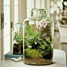 Terrarium décoratif à fabriquer soi-même
