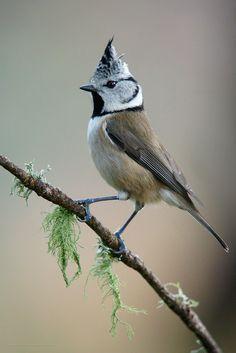 Small Birds, Little Birds, Colorful Birds, Most Beautiful Animals, Beautiful Birds, Pretty Birds, Love Birds, World Birds, Kinds Of Birds