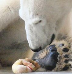 New-born polar bear
