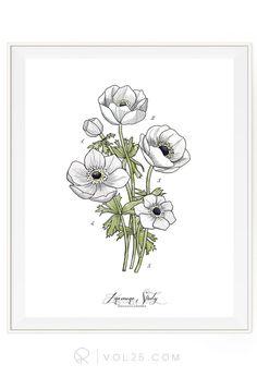 Anemone Study Vol.1   Scientific Textured Cotton Canvas Art Print in 4 Sizes   VOL25 - vol25