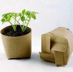bio degradable seedling pots from loo roll middles---Genius
