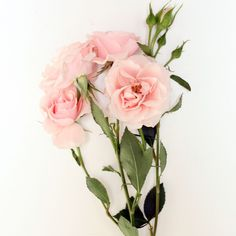 pink spray rose- poppies and posies Spring Projects, Spray Roses, Cut Flowers, Pink Roses, Flower Power, Poppies, Wedding Flowers, Floral Wreath, Artsy