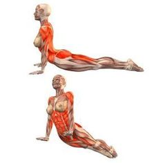 One of the best ways to have relief from lower back pain is through Hatha Yoga exercises. Yoga poses can help the symptoms and root causes of back pain. Ashtanga Yoga, Kundalini Yoga, Yoga Bewegungen, Yoga Pilates, Yoga Meditation, Yoga Series, Yoga Fitness, Yoga Muscles, Power Yoga