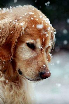 En la nieve wiiii