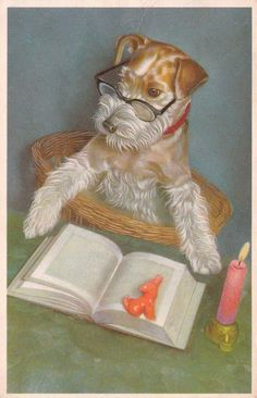 Vintage Belgian postcard, dated 1955, featuring a Wire Fox Terrier.