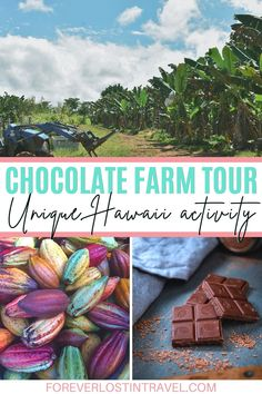 Discover one of the most sustainable tours in Hawaii with this farm to bar chocolate experience. Find out how to book, what you will see (and taste) and why this is such an important tour to take part in. If you're looking for a truly unique tour on your trip to the Big Island of Hawaii this will be perfect for the whole family #travel #Hawaii #USAtravel #foreverlostintravel #sustainabletour #Hawaiiactivities #Hawaiitours #sustainabletravel Hawaii Honeymoon, Hawaii Vacation, Hawaii Travel, Usa Travel, Travel Tips, Travel Destinations, Travel Couple, Family Travel, Life Inspiration