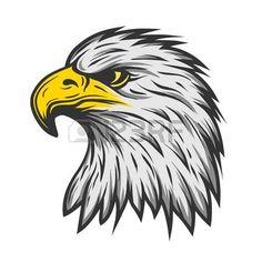 aguila: cabeza de águila orgullosa. Ilustración de color Vector de versión. Vectores