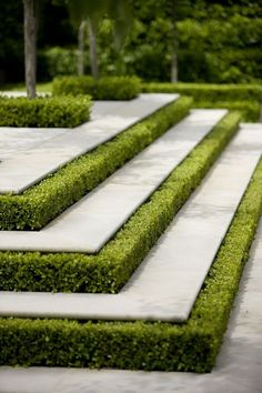 Box risers, garden designed by #peterfudge #Hedgesgardendesign