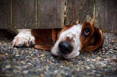 Photograph Peeking Dog by Ben on 500px