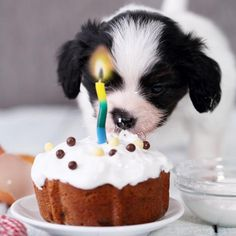 Recetas de tartas para perros DIY 🍰 Cake recipes for dogs. Get down to work in the kitchen and prepare a special cake. Cupcakes For Dogs Recipe, Dog Cake Recipes, Dog Cupcakes, Cupcake Recipes, Dog Food Recipes, Diy Pour Chien, Dog Bakery, Homemade Dog Treats, Dog Birthday