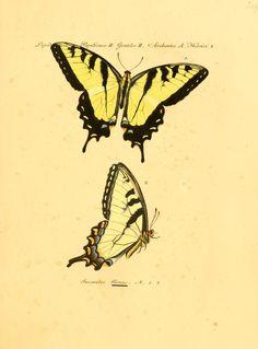 Sammlung exotischer Schmetterlinge