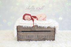 Christmas baby photo shoot newborn baby. Shellie Wall Photography