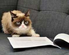 Blank Grumpy Cat with contracts