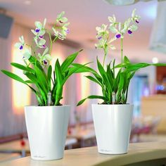 Lechuza Deltini Self Watering Planter: The DELTINI self-watering planter's design blends a round base which transitions to a soft square. This versatile table top planter is perfect for blooming plants such as orchids, and violets or foliage plants. Patio Planters, Planter Table, White Planters, Planter Pots, Modern Planters, Planter Liners, Growing Orchids, Self Watering Planter, Blooming Plants