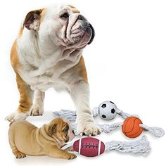TDGoodTimes/PawTime Squeaky Ball with Rope Dog Toy - Pack... http://www.amazon.com/dp/B00KUR5E8G/ref=cm_sw_r_pi_dp_vBBtxb0J6K68Y