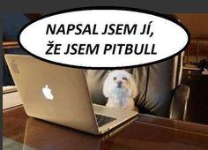 Napsal jsem jí, že jsem Pitbull Good Jokes, Funny Jokes, American Pitbull, Dog Breeds, Haha, Pitbulls, Funny Pictures, Humor, Entertaining