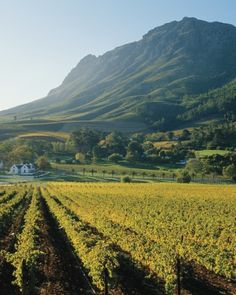 Cape Winelands -- South Africa