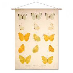 Combo Design is officieel dealer van Naturalis Unlimited ✓Vijftien gele en witte vlinders doekdoek ✓ Verschillende varianten verkrijgbaar ✓ Gratis verzending (NL)✓ Curtains, Shower, Prints, Design, Rain Shower Heads, Blinds, Showers, Draping