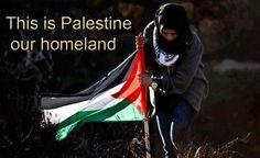 Palestine-my-homeland.jpg (600×367)